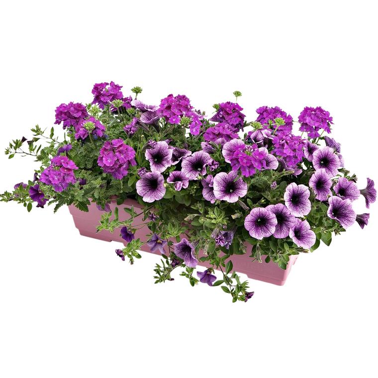 Jardinière anglaise. La jardinière de 50 cm 441071
