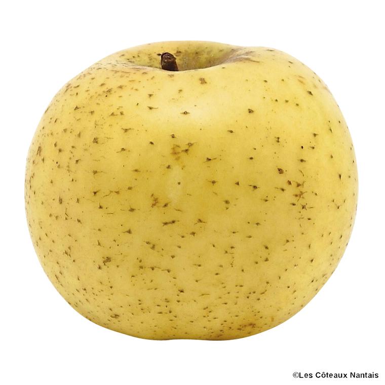 Pomme Chantecler - Prix au kg 443312
