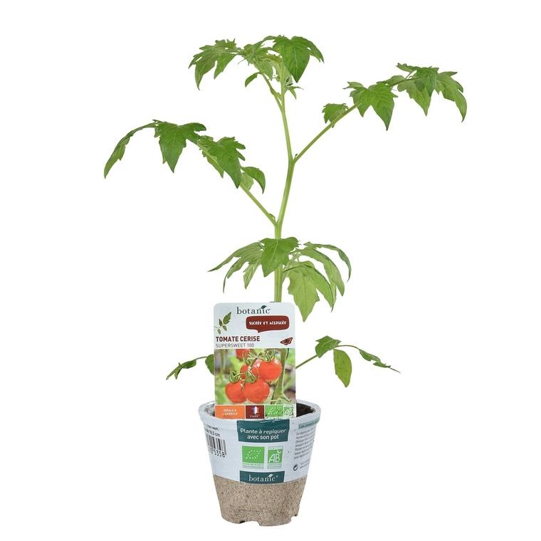Tomate Cerise ronde Supersweet 100 bio. Le pot de 1 litre recyclé 447640