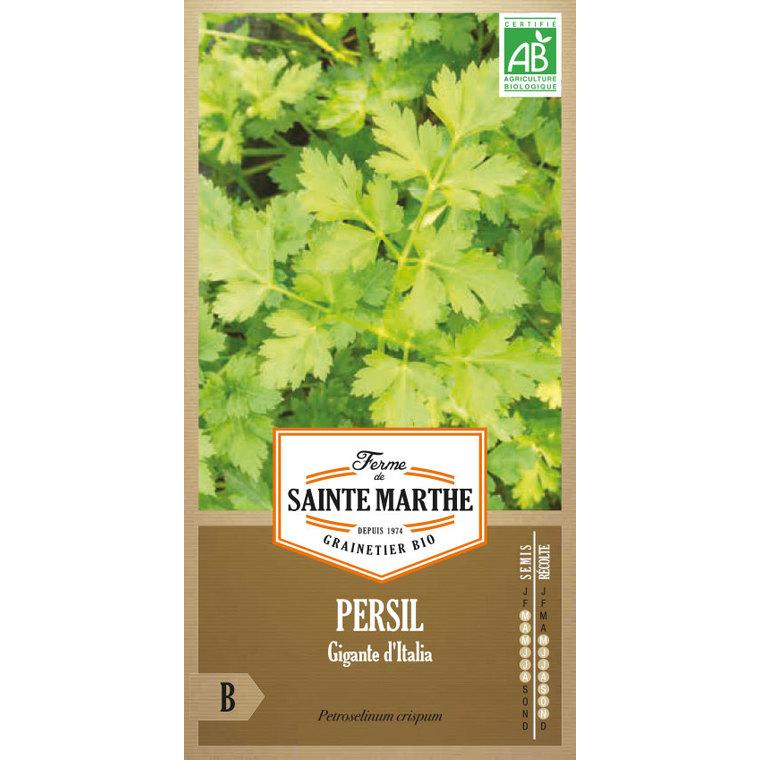 Persil Géant d'Italie 449456