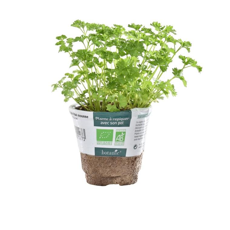 Persil Frisé bio. Le pot compostable de 10.5 cm 450527