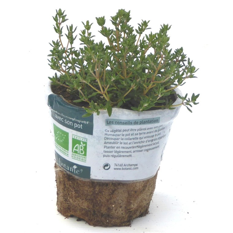 Thym Ordinaire bio. Le pot compostable de 10.5 cm 450533