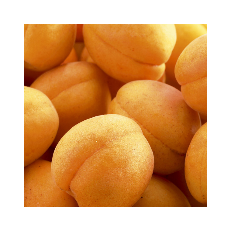 Abricotier Rustique Des Pyrenees ®Bourqui forme gobelet 45086