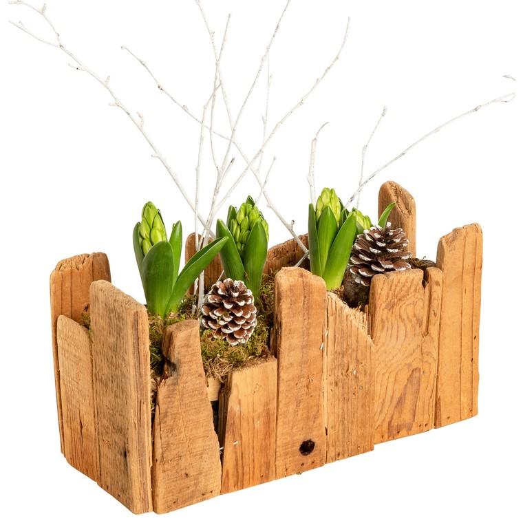Jacinthes x3 jardinière bois flotté. La composition 453151