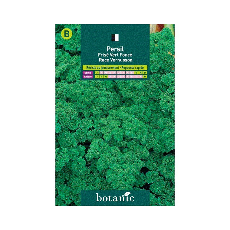 Persil fris vert race vernusson graines aromatiques for Entretien persil jardin