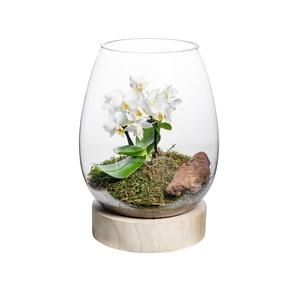 Terrarium Wood Phalaenopsis, hauteur 25cm