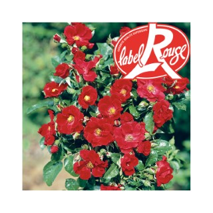 Rosier Xeruis® Label Rouge en pot de 5L