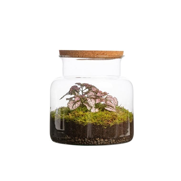 Terrarium jungle Bulle de Nature taille S Ø 23 x h 20 cm 524038