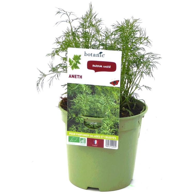 Aneth bio. Le pot de 1 litre recyclé 52499