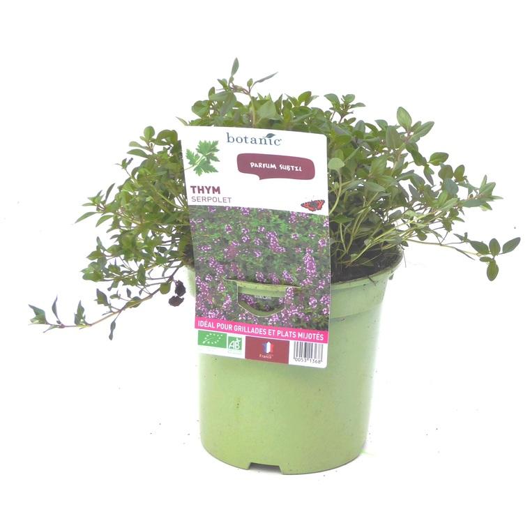 Thym Serpolet. Le pot de 1 litre recyclé 53136