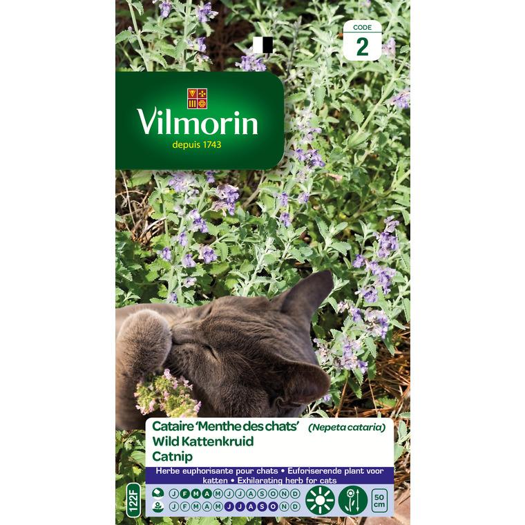 graines cataire 100 pcs plantes chat menthe aromatiques cataire plantes aromatiques Herb semences pour le jardin animal meilleur cadeau