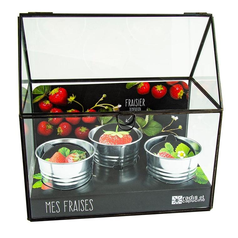 Mini serre à châssis noir pour fraisiers à semer 25x25x15 cm