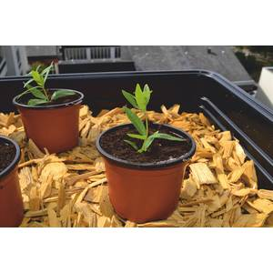 Pot de germination coloris orange Ø 9 cm 61691