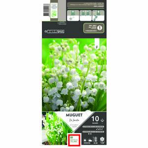 Muguet nantais blanc en pochette de 10 plants 638867