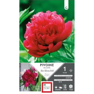 Bulbe de Pivoine herbacée Karl Rosenfield rouge 638876