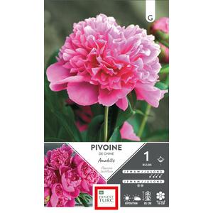 Bulbe de Pivoine herbacée Amabilis rose 638878