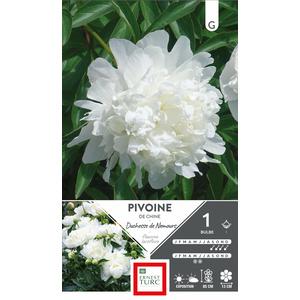 Bulbe de Pivoine herbacée Duchesse de Nemours blanc 638879