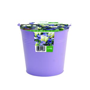 Bulbe tulipe rouge et anémone bleue en pot métal botanic® x 15 654153