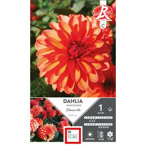 Bulbe de Dahlia décoratif Clémenvilla orange 665450