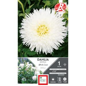 Bulbe de Dahlia dentelle White Lace blanc 665459