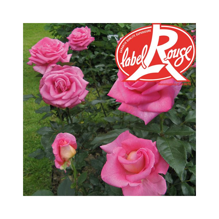 Rosier Parfum Royal® Label Rouge en pot de 5L 647011