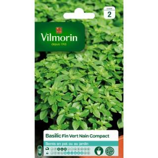 Basilic fin vert compact 782665