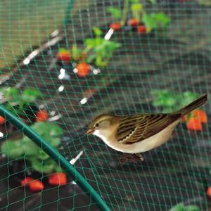 Filet de protection anti-oiseaux coloris vert 2x10 m 784617
