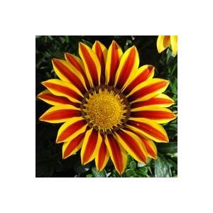 Mélange spécial soleil. Le pack de 4 plants 941889