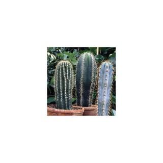 cact e et plante grasse plante d 39 int rieure facile d 39 entretien botanic. Black Bedroom Furniture Sets. Home Design Ideas