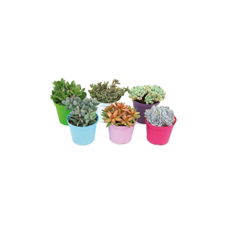 cact es et plantes grasses plantes et fleurs d 39 int rieur. Black Bedroom Furniture Sets. Home Design Ideas