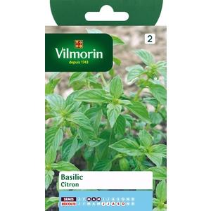 Basilic citron 933399