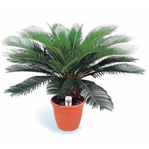 Faux palmier