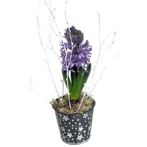 Jacinthe pot étoile. La composition 967370