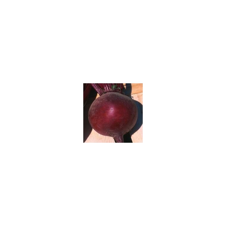 Betterave Rouge. La barquette de 6 plants 489110