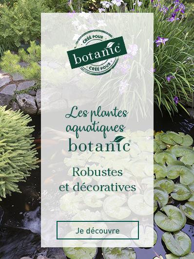 plantes-aquatiques-botanic
