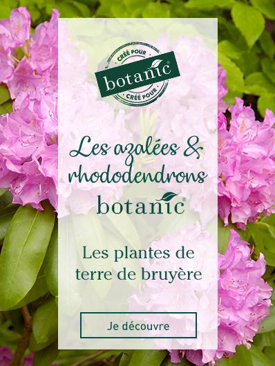 azalees-et-rhododendron-botanic