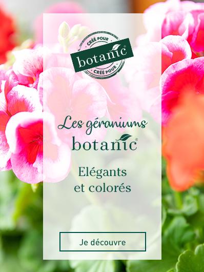 geraniums-botanic