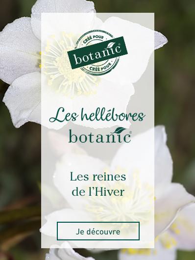 les-hellebores-botanic