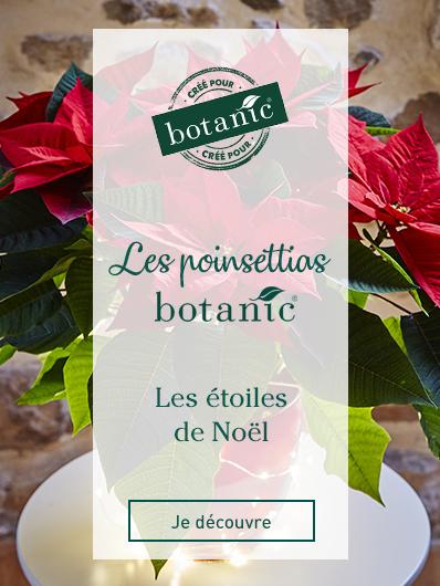 les-poinsettias-botanic