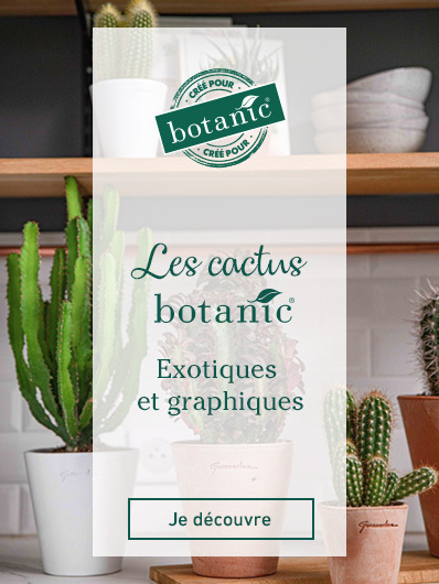 cactus-botanic
