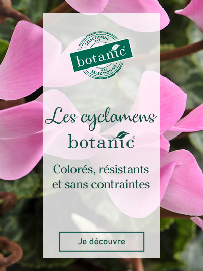 rosiers-label-rouge-botanic
