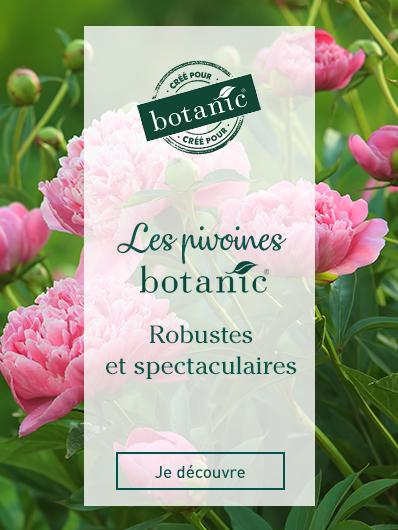 pivoines-botanic