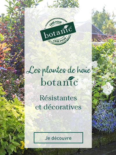 plantes-haie-botanic