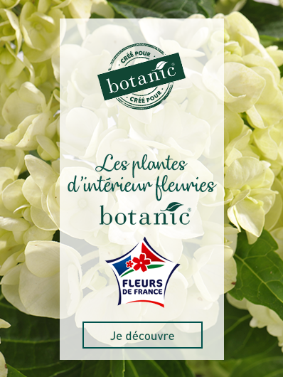 plantes-fleuries-botanic