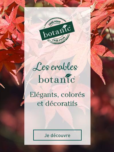 rosiers-label-rouge-botanic