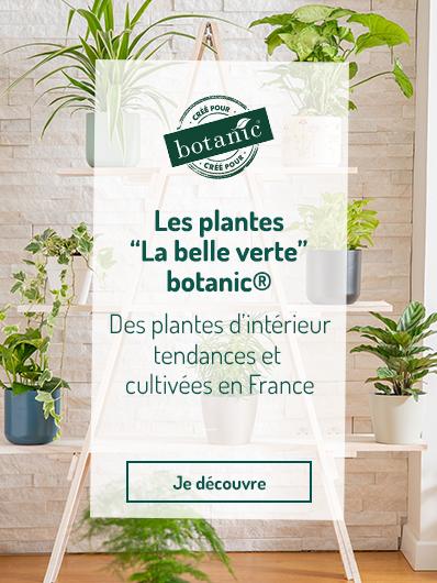 plantes-vertes-botanic