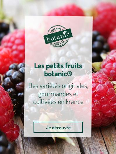 petits-fruits-botanic