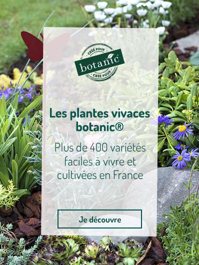 plantes-vivaces-botanic