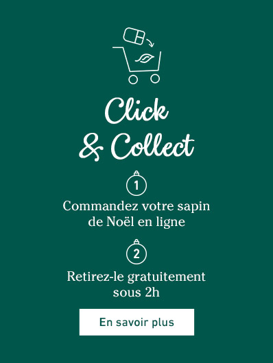 click-and-collect-sapins-noel