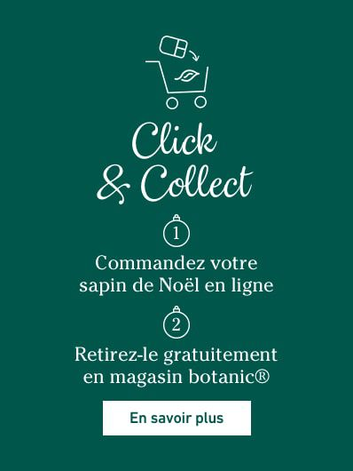 click-and-collect-noel